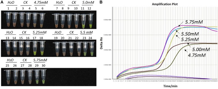 Optimization of Mg 2+ concentration for the LAMP reaction of the bar transgene. (A) LAMP products detected by 1000 × SYBR Green I. (B) The amplification curves obtained in real-time LAMP based on different Mg 2+ concentrations. (A) : Tubes 1, 2, 7, 8, 13, 14, 19, 20, 25, and 26: ddH 2 O. Tubes 3, 4, 9, 10, 15, 16, 21, 22, 27, and 28: FN95-1702 (negative control, CK). Tubes 5, 6, 11, 12, 17, 18, 23, 24, 29, and 30: the plasmid 1Ac0229. Tubes 1–6, 7–12, 13–18, 19–24, and 25–30: Concentration of Mg 2+ is 4.75, 5.00, 5.25, 5.50, and 5.75 mM, respectively, two technical replicates. (B) Curves separately represent the Mg 2+ concentrations of 5.75, 5.5, 5.25, 5.00, and 4.75 mM, from left to right. The colored line at the very bottom indicates the blank and negative controls.