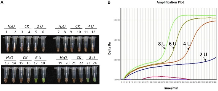 Optimization of Bst DNA polymerase concentration for the LAMP reaction of the bar transgene. (A) LAMP products detected by 1000 × SYBR Green I. (B) The amplification curves obtained in real-time LAMP based on different dosage of Bst DNA polymerase. (A) Tubes 1, 2, 7, 8, 13, 14, 19, and 20: ddH 2 O. Tubes 3, 4, 9, 10, 15, 16, 21, and 22: FN95-1702 (negative control, CK). Tubes 5, 6, 11, 12, 17, 18, 23 and 24: the plasmid 1Ac0229. Tubes 1–6, 7–12, 13–18, and 19–24: Bst DNA polymerase concentrations of 2.0, 4.0, 6.0, and 8.0 U, respectively, two repeats. (B) Curves separately represent the dosage of Bst DNA polymerase of 8.0, 6.0, 4.0, and 2.0 U, from left to right. The colored line at the very bottom indicates the blank and negative controls.