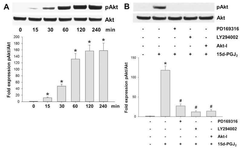 15d-PGJ 2 promotes Akt phosphorylation via p38 MAPK activation. (A) MG-63 cells were treated with 15d-PGJ 2 (20 μM) for indicated time periods to follow Akt phosphorylation (pAkt, T 308 ) using Western blot analysis. (B) Cells were incubated with PD169316 (25 μM), LY294002 (10 μM) or Akt-I (5 μM) for 30 min prior to 15d-PGJ 2 treatment (20 μM) for 1 h to follow pAkt expression. For Western blot analysis total protein lysates were subjected to SDS–PAGE. Total Akt expression was used as loading control. One representative blot (A/B [upper panel]) out of three is shown. Densitometric evaluation of immunoreactive bands is given below (A/B [lower panel]). Values are expressed as mean ± SEM ( n = 3). * p ⩽ 0.05 vs. control; # p ⩽ 0.05 vs. 15d-PGJ 2 .