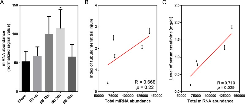 Temporal correlation between the expression of global miRNAs and renal function indexes. (A) Temporal <t>miRNA</t> expression change within 48 h after renal IRI. miRNA abundance is defined as raw <t>microarray</t> signal output normalized to the blank value 0.1; ∗ p