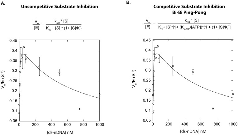 k cat /K m Curve for T4 DNA Ligase. The data was obtained through titration of increasing concentrations of a 75mer-ds-nDNA substrate, reacted at 16°C to determine initial reaction rates. T4 DNA ligase concentrations used were 25 pM– 100 pM. The initial rates were plotted against their respective substrate concentrations and fit by: A . a classical uncompetitive substrate inhibition model ( Eq 2 ), where k cat and K m Values of 0.44 s -1 ± 0.3 s -1 and 4 nM ± 1 nM respectively, were determined. The K i value for substrate inhibition was calculated to be 590 nM ± 170 nM. B . A competitive substrate inhibition for a Bi-Bi Ping-Pong mechanism ( Eq 3 ) k cat and K m values of 0.48 s -1 ± 0.3 s -1 and 4 nM ± 1 nM respectively, were determined. The K i value for substrate inhibition was calculated to be 54 nM ± 15 nM. All data points are the average of at least three independent experiments, and the error reported is the standard deviation for the replicates.