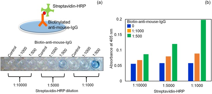 Optimization of biotinylated antibody and streptavidin-HRP. Two different dilutions of biotinylated antibody (1:500 and 1:1000) were coated onto ELISA plates. Different dilutions of streptavidin-HRP (1:1000, 1:5000, and 1:10000) were added and the interaction between biotinylated antibody and streptavidin-HRP was detected. (a) Color change in the solution after the addition of HRP substrate. (b) Graphical representation of the optimization.