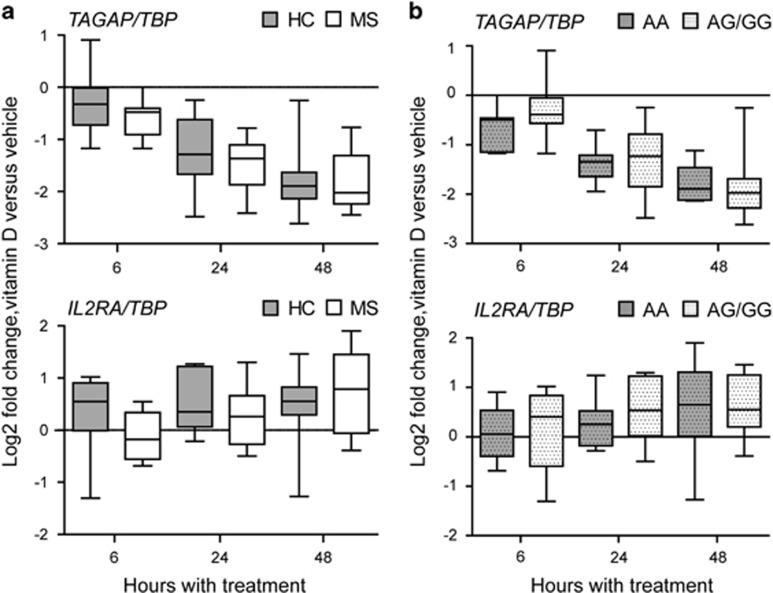 Calcitriol response of TAGAP and IL2RA in CD4+ T cells is not influenced by MS or MS-risk genotype. CD4+ T cells from 8 RRMS patients (MS) and 10 healthy controls (HC) genotyped for MS-risk SNPs in TAGAP (rs1738074) and IL2RA (rs7090512) were cultivated for 7–8 days with αCD3/CD28 and <t>IL-2,</t> treated as described in Materials and Methods before harvesting after 6, 24 and 48 h, with 1,25(OH) 2 D 3 or vehicle control. The box plots with whiskers defining minimum and maximum show the log2 values of relative expression of indicted genes (relative to TBP ) in 1,25(OH) 2 D 3 -treated cells divided by relative expression in vehicle-treated cells, that is, log2 of fold induction by 1,25(OH) 2 D 3 at each time point for ( a ) MS patients compared with HCs and ( b ) the same samples sorted on IL2RA and TAGAP genotype, that is, samples carrying the minor allele ( IL2RA : N =10, MAF (G)=0.3480; TAGAP : N =11, MAF (G)=0.46563) compared with samples homozygous for major allele ( N =8 ( IL2RA ); N =7 ( TAGAP )). The horizontal lines within the boxes represent the median of the groups, and Mann–Whitney U -test was performed to compare the groups (MS vs HC, AA vs AG/GG). The horizontal line at 0 indicates no induction by 1,25(OH) 2 D 3 .