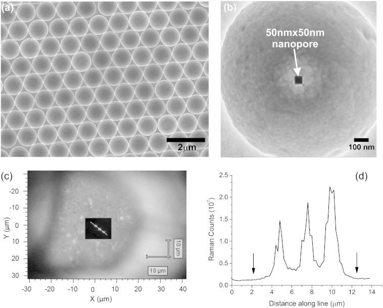 (a) Scanning electron microscope (SEM) image of the electroplated gold micro-cavities on the membrane. The scale bar is 2 μm. (b) Helium ion microscope (HIM) image of a single micro-cavity with a nanopore. The scale bar is 100 nm. (c) Raman spectroscopy of the three-dimensional gold film with three 50 nm square nanopores ~ 2.4 μm apart, after treatment with thiophenol (633 nm excitation wavelength, × 100 magnification) the overlay is a map of the Raman signal intensity (scale black to white) in the area scanned is provided as an overlapping plot over the bright field image of the gold microcavity film with a TEM grid. (d) Plot of the Raman counts (integrated over the whole spectrum measured) with distance for the points indicated by the white line shown in Fig. (c). The arrows on the plot indicate the location along the line where there are the centres of microcavities with no pores.