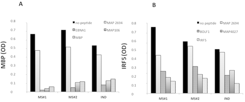 Competition assay with MBP ( A ) and IRF5 ( B ) coated ELISA plates. ( A ) CSF from 2 MS patients and 1 IND were pre-incubated overnight with saturating concentrations [10 μM] of MAP2694 38–46 (negative control), EBNA1 400–413 , MAP 106 121–132 and MBP 85–98 (positive control), The first bar represents a regularly performed ELISA (1:2 CSF in PBS-T) peptide. ( B ) The same CSF were pre-incubated with MAP2694 38–46 (negative control), BOLF1 305–320 , MAP_4027 18–32, and IRF5 424–434 (positive control). The first bar represents a regularly performed ELISA (1:2 CSF in PBS-T) peptide.