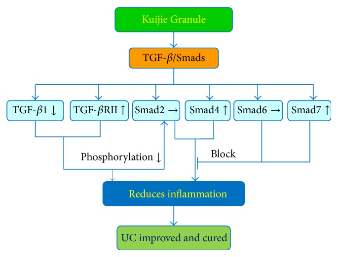Mechanisms of Kuijie Granule in suppressing ulcerative colitis. Kuijie Granule can improve the clinical symptoms (diarrhea, mucous bloody stool, abdominal pain, abdominal distention, and tenesmus) in UC patients by regulating TGF- β /Smads signal transduction pathway. Kuijie Granule decreased the expression of TGF- β 1, increased the expression of TGF- β RII, Smad4, and Smad7, and has no effect on Smad2 and Smad6 expression; then, the decreasing of the phosphorylation of anti-inflammation signal proteins and the blocking of the expression of inflammation signal proteins finally reduced inflammation reaction to improve or cure UC. Interactions leading to activation of molecular targets are indicated by arrows; those that are inhibited are indicated by a bar.