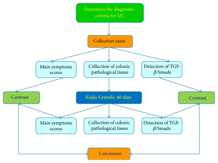 Study flow chart of Kuijie Granule for ulcerative colitis. In this study, we take steps as follows: (1) determine the diagnostic criteria for UC; (2) collect the cases and score the main symptoms; (3) collect the colonic pathological tissue to detect and analyze the expression of TGF- β /Smads, which include TGF- β 1, TGF- β RII, Smad2, Smad4, Smad6, and Smad7; (4) treat UC patients with Kuijie Granule for 60 days; (5) repeat steps (2) and (3); (6) compare the main symptoms scores and TGF- β /Smads expression before and after Kuijie Granule treatment; (7) get the conclusions.