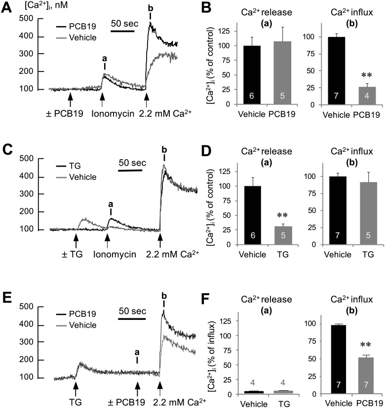PCB19 inhibits ionomycin and thapsigargin-induced Ca 2+ influxes. (A, C, E) Fura-2-loaded PC12 cells were incubated in Ca 2+ -free Locke's solution, challenged with 50 μM PCB19, 1 μM thapsigargin or 300 nM ionomycin, and treated with 2.2 mM CaCl 2 at the indicated time (arrow). (B, D, F) The [Ca 2+ ]i level at point a (Ca 2+ release) and b (Ca 2+ influx) were quantitatively analyzed using calcium traces and expressed as % of controls. Number of experiments are depicted in bar graph and each point represents mean ± SEM. TG, thapsigargin. ** P