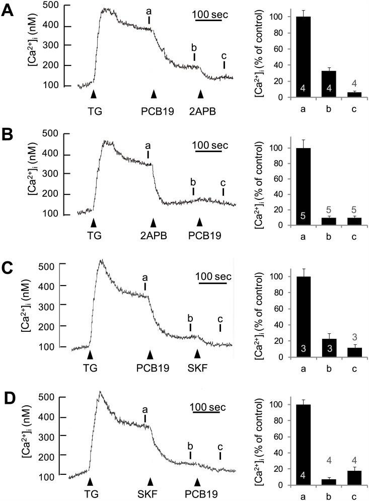 PCB19 inhibits thapsigargin-induced SOCE in a manner similar to other SOCE antagonists. A, Fura-2-loaded PC12 cells were treated with 1 μM thapsigargin (TG), then sequentially challenged with 100 μM PCB19 and 30 μM 2-aminoethylphenyl borate (2APB). B, Cells were treated with 1 μM thapsigargin, challenged with 20 μM 2APB, and then treated with 50 μM PCB19. C, Cells were treated with 1 μM thapsigargin, then challenged sequentially with 100 μM PCB19 and 20 μM SK F96365 (SKF). D, Cells were treated with 1 μM thapsigargin, challenged with 20 μM SK F96365, and then treated with 50 μM PCB19. The [Ca 2+ ]i level at point a , b , and c were quantitatively analyzed using calcium traces. Number of experiments are depicted in bar graph and each point represents mean ± SEM.