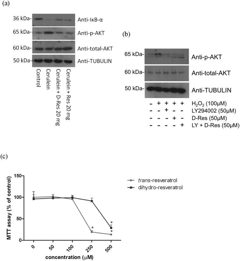 Dihydro-resveratrol decreased IκB degradation and AKT phosphorylation. ( a ) IκB- α degradation and AKT phosphorylation in rat pancreatic tissues were visualized on immunoblots probed with anti-IκB- α , anti-p-AKT and anti-total AKT antibodies. Tubulin was served as a loading control. ( b ) Isolated pancreatic acini were pre-incubated with H 2 O 2 for 30 minutes, and treated with dihydro-resveratrol, and/or LY294002 for 1 hour. The phosphorylation of AKT in isolated pancreatic acini was examined by means of Western blotting. Tubulin was served as a reference control of the cytoplasmic fraction. ( c ) Acinar cells were treated with a series concentration of dihydro-resveratrol or trans -resveratrol (0 to 1000 μM) for 24 hours. The cytotoxicity of dihydro-resveratrol in isolated acini was assessed using MTT cell viability assay.