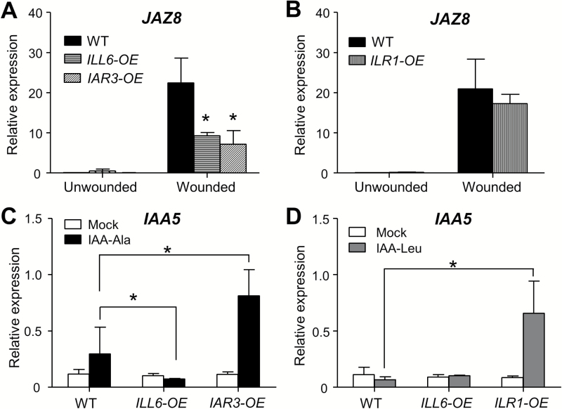 Overexpression of amidohydrolases impacts JA and IAA marker gene expression. (A and B) qRT–PCR analysis of JAZ8 expression in unwounded and wounded (2h) leaves of the WT, ILL6-OE (line 5), IAR3-OE (line 42), and ILR1-OE . Fold change relative to the unwounded WT transcript level is displayed. (C and D) IAA5 expression in 9-day-old seedlings grown on MS medium containing the mock treatment, 50 μM IAA-Ala, or 30 μM IAA-Leu. Expression levels relative to ACTIN8 are displayed. Error bars denote the SD of three biological replicates. Asterisks indicate a significant difference at P