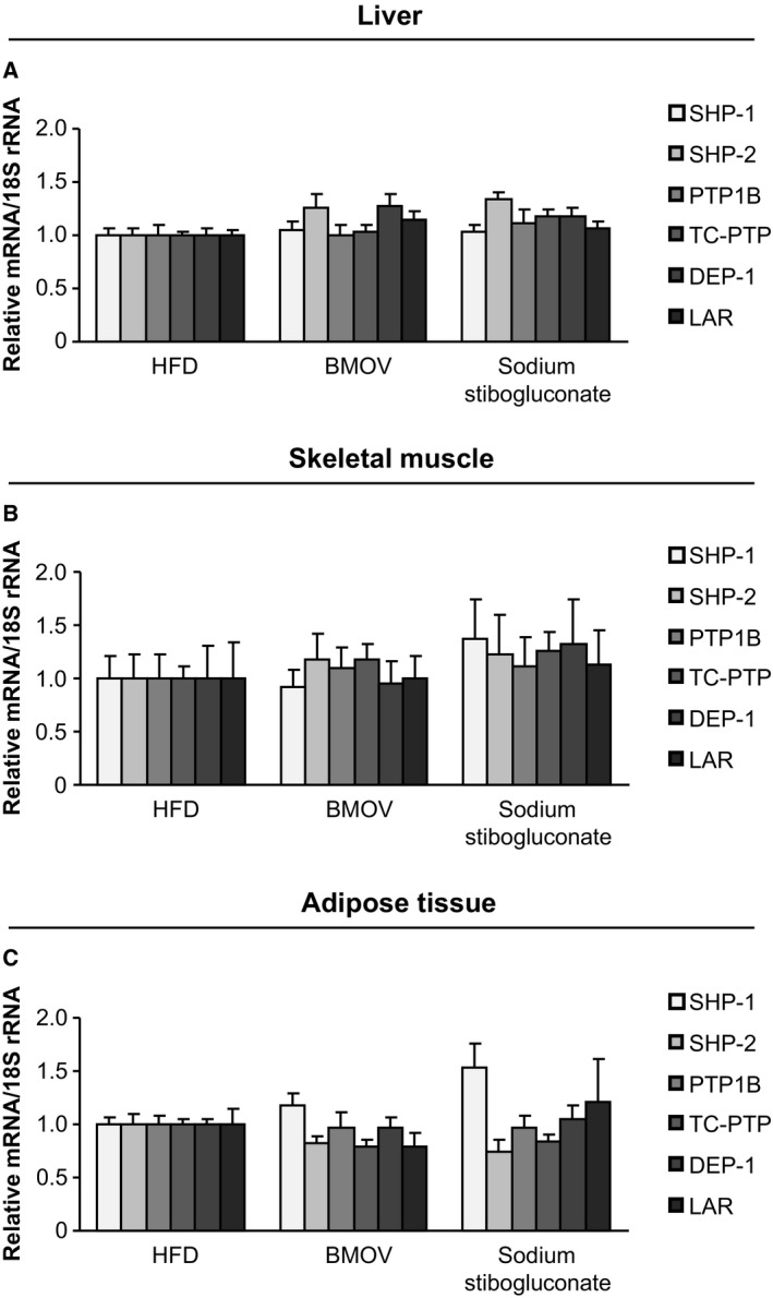 PTP s are not differentially expressed after PTP inhibition in metabolic tissues. Measurements of PTP expression on mRNA level were performed in liver (A), skeletal muscle (B) and adipose tissue (C) of BMOV and sodium stibogluconate treated mice compared to HFD mice.