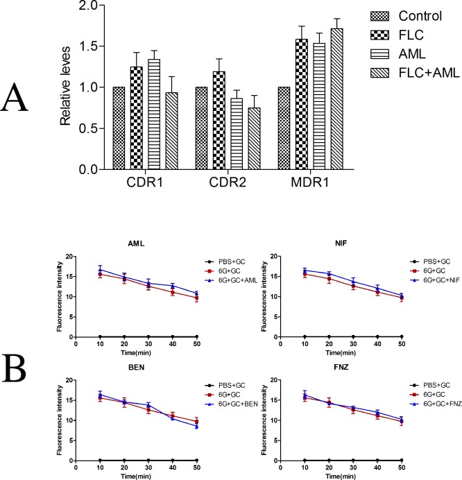 The influence of tested calcium channel blockers on fluconazole efflux. (A). Relative expression of CDR1 , CDR1 and MDR1 following treatment with fluconazole (FLC) and amlodipine (AML) alone or in combination in CA10. Cells were treated with fluconazole at 1 μg ml -1 , amlodipine at 16 μg ml -1 alone or in combination. Total RNA was extracted and reversely transcribed to cDNA. cDNA was then used for real-time quantitative PCR to detect expression levels of CDR1 , CDR1 and MDR1 . Values represent the means ± standard deviation of three replicates. (B). The influence of amlodipine, nifedipine, benifdipine and flunarizine on efflux of fluconazole was tested by rhodamine 6G assay. There was almost no difference in fluorescence intensity with or without the tested calcium channel blocker. Values represent the means ± standard deviation of three replicates. * P