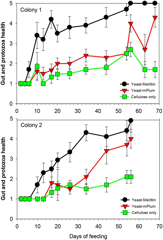 Changes in health of gut and protozoa of Formosan subterranean termite workers after feeding bait containing live yeast expressing Melittin, fluorescent protein (mPlum) or plain cellulose without yeast. Error bars represent 95% confidence intervals; non-overlapping confidence intervals signify significant difference among treatments.