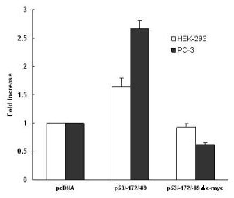 Activation of the p53 promoter by PTTG is mediated through the c-myc/max sequence. HEK293 (open bars) and PC3 (solid bars) were co-transfected with the pcDNA3.1- PTTG and p53/-172/-89 (wild-type myc/max binding sequence) or the p53/-172/-89-Δ- c-myc (mutated myc/max binding sequence) promoter construct. Transfections were performed in duplicate and the results are expressed as mean ± S.E.M of four independent experiments (*, p