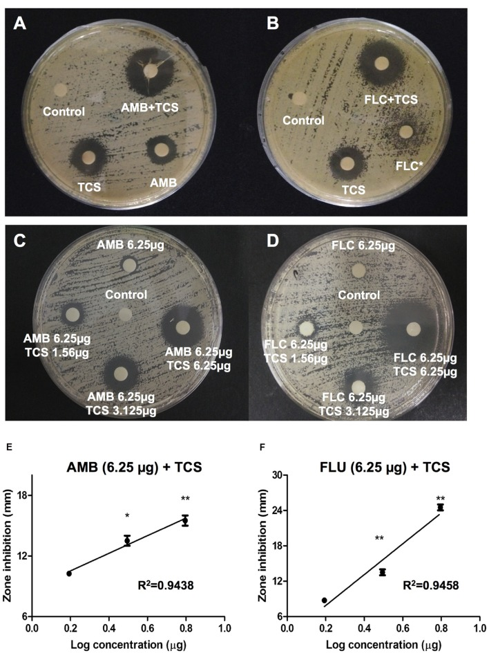 The effect of triclosan with amphotericin B and fluconazole. (A,B) Agar disk diffusion assay for triclosan (TCS) in combination with (A) amphotericin B (AMB), or (B) fluconazole (FLC) in C. neoformans H99-containing agar plates. 25 μg of each drug was applied on a disk. (C,D) Agar disk diffusion assay for TCS (1.56, 3.125, and 6.25 μg/ml) in combination with at subinhibitory concentrations (6.25 μg/ml) of (C) AMB and (D) FLU. Diameters of the inhibition zone were measured after 48 h of incubation. Asterisk ∗ indicates partial inhibition. Data shown are representative pictures of three independent experiments. (E,F) Graphs show the inhibition diameter (mm) of C. neoformans plate after triclosan treatment in combination with AMB or FLU. X-axis shows Log concentration of triclosan. Data shown are mean ± SD. ∗ P