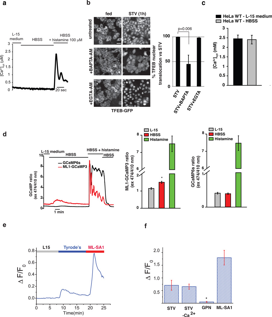 Starvation induces lysosomal Ca 2+ release via MCOLN1. (a) Starvation does not induce bulk cytosolic Ca 2+ elevation in HeLa cells transfected with the Ca 2+ -sensitive probe aequorin. Bulk cytosolic [Ca 2+ ] was monitored during perfusion with complete L-15 medium, HBSS and HBSS supplemented with 100µM histamine as indicated. n=8 coverslips from two independent transfections (b) Stable HeLa TFEB-GFP cells were left untreated or pretreated for 30 minutes with the Ca 2+ chelators <t>BAPTA-AM</t> or <t>EGTA-AM</t> (5µM each). After washing, cells were left untreated or starved for 1 hr. After treatment, cells were fixed and a HC imaging analysis was performed. The plot shows the percentage of TFEB nuclear translocation in BAPTA-treated cells compared with untreated and EGTA treated (mean ± s.d., n=3 independent experiments). Scale bar 10µm. (c) Average [Ca 2+ ] cyt evoked by maximal histamine stimulation in WT HeLa cells. Agonist stimulation was carried out in complete L-15 medium or after a three minutes starvation with HBSS (2.45 ± 0.19 µM, HeLa WT in L-15 medium; 2.406 ± 0.23 µM, HeLa WT in HBSS; n=8 coverslips from two independent transfections). (d) Representative traces of the cytosolic GCaMP6s and the perilysosomal ML1-GCaMP3 calcium probes. HeLa cells were transfected with the indicated probe and ratiometric imaging (474 and 410 nm excitation) was performed. Cells were continuously perfused with the indicated solutions. The plot in the middle represents the average perilysosomal calcium peak values induced by perfusion of the indicated buffer, as recorded by the GCaMP3-ML1 probe (R: 1.149 ± 0.051, L-15; 1.508 ± 0.060, HBSS; 7.500 ± 0.456, histamine; n= 18 cells from two independent transfections). The plot on the right represents the average cytosolic calcium peak values induced by perfusion of the indicated buffer, as recorded by the GCaMP6s probe (R: 0.404 ± 0.026, L-15; 0.389 ± 0.022, HBSS; 7.473 ± 0.428, histamine; n = 12 cells from two independent transfe