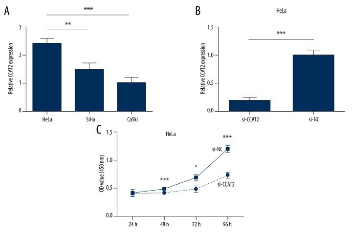 Relative expression of CCAT2 in 3 cervical cancer cell lines was carried out by qRT-PCR ( A ). Knockdown effects of siRNA CCAT2 in HeLa cell line ( B ). CCK8 assay to test the function of lncRNA CCAT2. Downregulation of CCAT2 inhibited HeLa cells growth ( C ). Statistical analyses were performed with the independent samples t test. All data are shown as the mean ±SD.