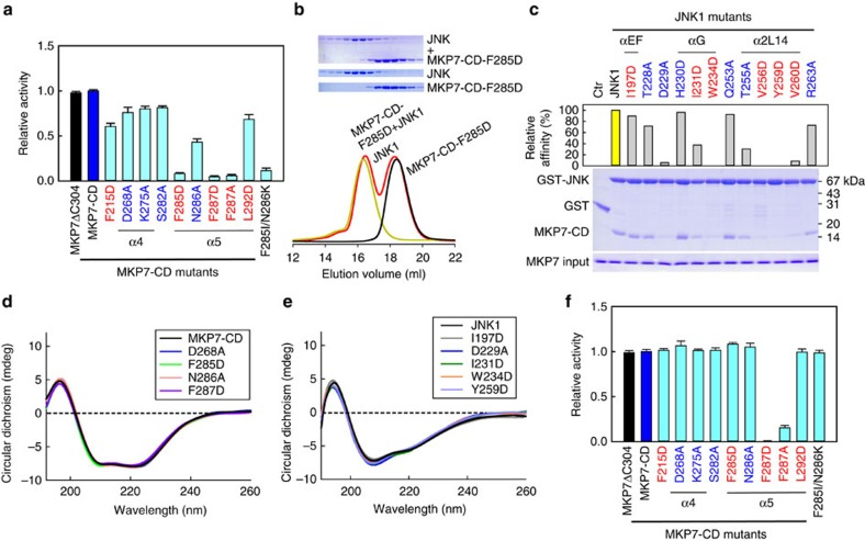 Mutational analysis on interactions between MKP7-CD and JNK1. ( a ) Effects of mutations in MKP7-CD on the JNK1 dephosphorylation (mean±s.e.m., n =3). Residues involved in hydrophobic and hydrophilic contacts are coloured in red and blue, respectively. ( b ) Gel filtration analysis for interaction of JNK1 with MKP7-CD mutant F285D. Mutant F285D and JNK1 were eluted as monomers, with the molecular masses of ∼17 and 44 kDa, respectively. However, in contrast to the wild-type MKP7-CD, mutant F285D did not co-migrate with JNK1. ( c ) Pull-down assays of MKP7-CD by GST-tagged JNK1 mutants. The top panel shows the relative affinities of MKP7-CD to JNK1 mutants, with the affinity of wild-type JNK1 defined as 100%, the middle panel is the electrophoretic pattern of MKP7-CD and JNK1 mutants after GST pull-down assays. The protein amounts of MKP7-CD used are shown at the bottom. ( d ) Circular dichroism spectra for MKP7-CD wild type and mutants. Measurements were averaged for three scans. ( e ) Circular dichroism spectra for JNK1 wild type and mutants. Measurements were averaged for three scans. ( f ) Effects of mutations in MKP7-CD on the p NPP hydrolysis reaction (mean±s.e.m., n =3).