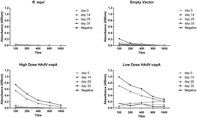 HAdV Capsid specific Total IgG antibody response in mice (tested at different time points) and titre. Diluted HAdV capsid antibody levels over the 35 day duration of the trial. Mouse sera pooled per vaccine group, diluted in a 2 fold fashion from 100–1600. Sera was collected at day 0 (pre vaccination), prime vaccine administered, day 14 (boost vaccination), day 28 (pre challenge) and day 35 (1 week post challenge, pre euthanasia) of each vaccine group; R . equi positive control, Empty vector negative control, HAdV- vapA high dose and HAdV- vapA low dose.