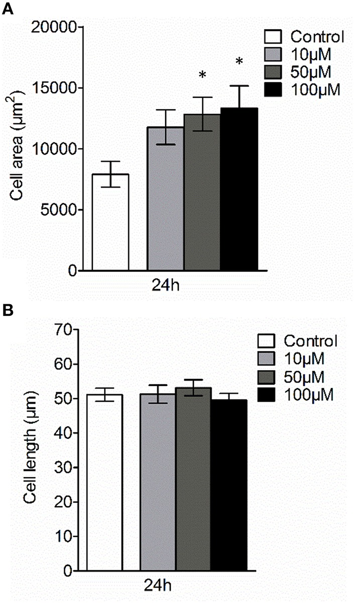 Effect of 3O-C 12 -HSL on AQP9-related cell size of macrophages . Cell were either treated with diluent 0.02% DMSO (Control) for 24 h, or stimulated with 10, 50, and 100 μM 3O-C 12 -HSL for 24 h, stained for AQP9, analyzed by LSCM as shown in Figure 4A . (A) Quantification of AQP9-related cell area. (B) Quantification of the approximate cell length of AQP9-stained macrophages (measured as indicated by white arrow in Figure 4A in the direction of polarization). Columns represent the means ± SE. Data from at least four different experiments performed on separate days from six different donors, and at least 100 cells in total per condition. Significant differences are indicated with * when P