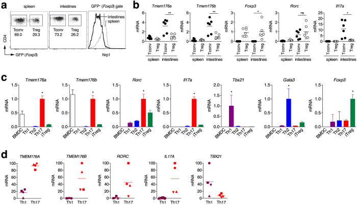 """Tmem176a and b mRNA expression in mouse and human T cells. ( a ) Conventional GFP − (Foxp3 − Tconv) or regulatory GFP + (Foxp3 + Treg) CD4 + T cells were FACS-sorted from the spleen or intestinal lamina propria (small intestine and colon) of Foxp3 EGFP mice. As expected, the population of Nrp1 −/low """"adaptive"""" peripherally Tregs is dominant in the intestines. Conversely, Nrp1 + """"natural"""" thymically derived Tregs represent the major population of Tregs in spleen. ( b ) Expression of indicated genes was assessed by quantitative RT-PCR. Each dot represents an individual mouse (n = 6–7 in each group). Statistically significant differences between intestinal Tconv and Treg are indicated: *p"""