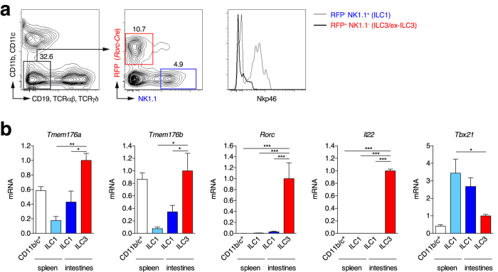 Tmem176a and b mRNA expression in intestinal ILC3s. ( a ) Lymphocytes from intestinal lamina propria of RORγt-fate map mice ( Rorc ( γt )- Cre TG × Rosa26-tdRFP ) were isolated. Lineage-negative (CD11b − CD11c − CD19 − TCRαβ − TCRγδ − ) RFP + NK1.1 − ILC3-enriched and RFP − NK1.1 + ILC1s were FACS-sorted. In parallel, CD11b/c + and lineage-negative NK1.1 + conventional NK/ILC1s were FACS-sorted from the spleen. ( b ) Expression of indicated genes (mean ± SD) was assessed by quantitative RT-PCR in each population isolated from 3–4 independent mice. Statistically significant differences between ILC3s and the other populations are indicated: *p