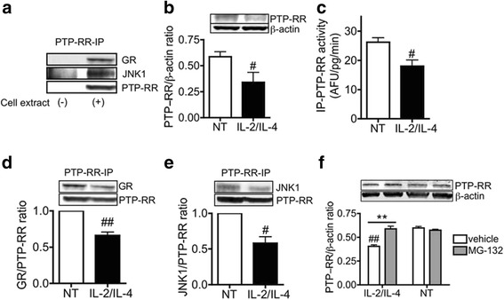 PTP-RR function under corticosteroid insensitive condition. a GR and JNK1 expression in PTP-RR-immunoprecipitates. b , c , d , e , f , U937 cells were exposed to IL-2/IL-4 for 48 h. PTP-RR protein expression ( b ) and activity ( c ) in whole cell extracts. GR ( d ) and JNK1 ( e ) protein expressions in PTP-RR-immunoprecipitates. Effect of MG-132 on PTP-RR expression ( f ). Data in ( d ) and ( e ) are expressed as fold change against non-treatment control (NT). Values represent means of four experiments ± SEM. # P
