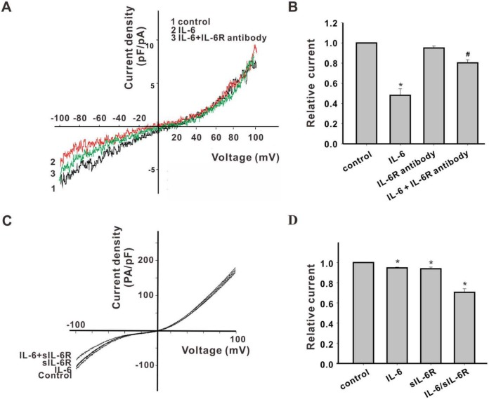 <t>IL-6R-mediated</t> IL-6 inhibition of TRPM7 inward currents. (A) Representative raw traces of TRPM7 current in cortical neurons perfused with IL-6R antibodies in Ca 2+ -free extracellular solution. (B) The inhibition of the TRPM7-like inward current by IL-6 was weakened in the presence of IL-6 receptor antibodies. (C) Representative raw traces of TRPM7 current in HEK293-TRPM7/WT cells perfused with IL-6 or sIL-6R only, or IL-6/sIL-6R, in Ca 2+ -free extracellular solution. (D) Co-treatment with IL-6 and sIL-6R produced maximal inhibition of inward TRPM7 currents in HEK293-TRPM7 cells.