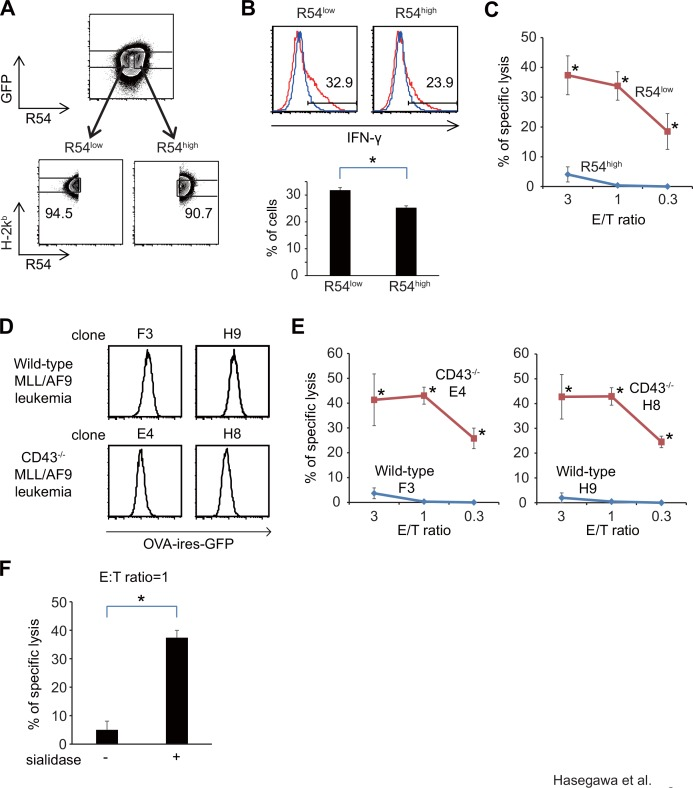 Glycosylation status of CD43 on leukemia cells is associated with sensitivity to CTL-mediated cytolysis. (A) Gating strategies for FACS-sorting the R54 high and R54 low subpopulations of OVA-expressing MLL/AF9 leukemia cells. (B) FACS analysis of intracellular IFN-γ in OT-1 T cells after co-culture with either R54 high or R54 low MLL/AF9 leukemia cells. IFN-γ expression in CD8 + T cells is shown. (C) 51 Cr cytotoxicity assay with OT-1 T cells, using either R54 high or R54 low leukemia cells as targets. (D) FACS analysis of OVA-IRES-GFP expression levels in MLL/AF9-OVA leukemia clones derived from c-kit + BM cells of the wild type or CD43 -/- mouse (E) 51 Cr cytotoxicity assay with OT-1 T cells, using either the wild type or CD43 -/- leukemia cells as targets (F) 51 Cr cytotoxicity assay with OT-1 T cells, using leukemia cells with or without sialidase treatment (E/T ratio = 1).