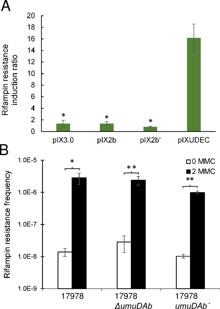 DNA damage-induced mutagenesis experiments suggest that UmuDAb does not perform UmuD polymerase accessory function. (A) DNA damage-induced mutagenesis (measured by, and represented as, the ratio of increased rifampin resistance observed in UV-treated vs untreated cells) was performed to assess whether umuDAb could complement an E . coli ΔumuD mutant. The E . coli Δ umuD772 ::kan strain 315 carried either: pIX3.0 (containing no DNA insert), pIX2b (pIX3.0 carrying A . baylyi umuDAb [ 20 ]), pIX2bˊ (pIX3.0 carrying A . baylyi umuDAb ˊ ( umuDAbΔ2–83 ), or pIXUDEC (pIX3.0 carrying E . coli umuD ). Differences among strains were analyzed with a two-tailed, one-way Kruskal-Wallis ANOVA, followed by Dunn's multiple comparisons post-test indicating significance denoted by * (p