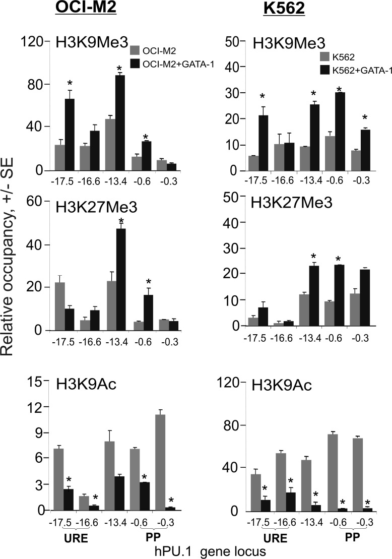 Repressive histone modifications following GATA-1 overexpression in AML-ELs. ChIP at the PU . 1 gene locus was carried out for the H3K9Me3, H3K27Me3, and <t>H3K9Ac</t> histone tail modifications in OCI-M2 (left) and K562 (right) cells. Grey bars: control cells, dark bars: 48hrs after GATA-1 transgene transfection. Data are relative to control antibody IPs (Y axis). T-test significance: p