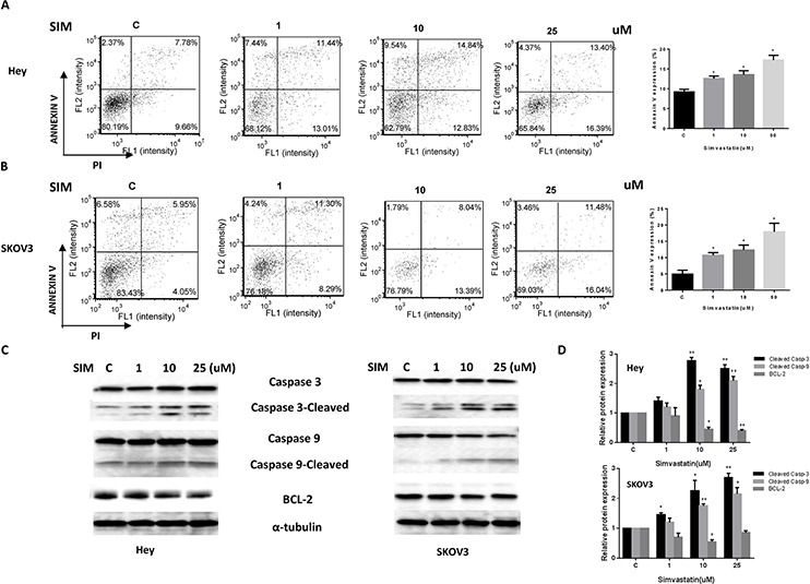 Simvastatin increased apoptosis in ovarian cancer cells The Hey A. and SKOV3 B. cell lines were cultured for 24 h and then treated with simvastatin at different doses for 24 h. Apoptosis was examined by Annexin V assay in Cellometer. Caspase-3, Caspase-9 and BCL-2 were determined by Western immunoblotting after exposure to simvastatin for 10 h or 24 h C and D. Each experiment was performed three times. C in graphs refers to control. (* p