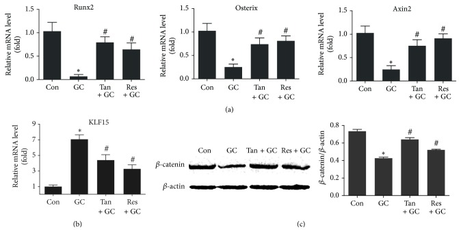 Tanshinol protects osteoblastic differentiation against GC involved in Wnt signaling and KLF15 transcriptional factor. Rats were treated as in Figure 1 , and measurements were made as follows. (a) mRNA levels of Runx2 gene and Osterix gene which contribute to osteoblast differentiation and of Axin2 gene (an indicator of Wnt pathway) were determined by qRT-PCR assay in long bone of rats. (b) mRNA levels of KLF15 gene were detected by qRT-PCR assay in long bone of rats. (c) Expression of β -catenin protein (a key molecule of canonical Wnt signaling) in the left tibia was measured by Western blot method. Representative figure was shown on the left panel, and quantification is shown on the right panel. Data are given as mean ± SD ( n = 3). ∗ P