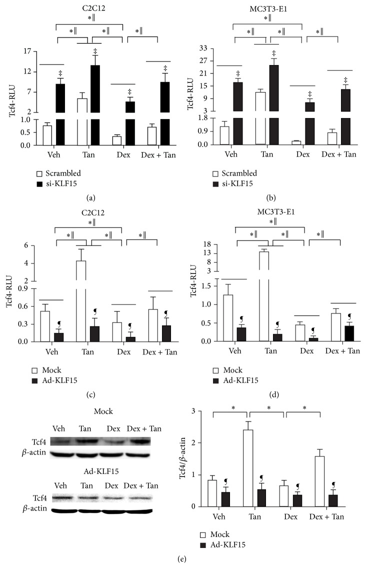 Tanshinol attenuates downregulation of canonical Wnt signaling elicited by Dex associated with regulation KLF15. ((a) and (b)) C2C12 cells or MC3T3-E1 cells were cotransfected with the Tcf4-luc or FoxO3a-luc reporter plasmid in combination with KLF15 siRNA or the scrambled sequence. ((c) and (d)) C2C12 cells or MC3T3-E1 cells were infected with the FoxO3a-luc or Tcf4-luc reporter plasmid in combination with recombinant adenovirus Ad-KLF15 or mock (noninfection). Luciferase activity assays were explored using the Dual-Luciferase Reporter Assay System as described under Section 2.8 in Materials and Methods. The data represent mean ± SD of luciferase relative luminescence units (RLU) normalized to corresponding renilla luciferase activity (triplicates). (e) Tcf4 (a requisite mediator for downstream effector Tcf of canonical Wnt pathway contributing to bone formation) in MC3T3-E1 cells exposed to Ad-KLF15 and mock was detected by Western blot assay. Representative figure was shown on the left panel, and quantification is shown on the right panel. Bars indicate mean ± SD of triplicate determinations. ∗ P