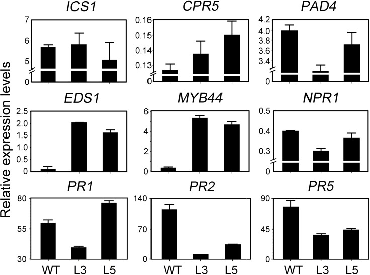 Expression of SA-related genes in transgenic Arabidopsis overexpressed PtrWRKY89 after inoculation of Pst DC3000. ICS1 : ISOCHORISMATE SYNTHASE 1 , PAD4 : PHYTOALEXIN DEFICIENT 4 , EDS1 : ENHANCED DISEASE SUSCEPTIBILITY 1 , MYB44 : ARABIDOPSIS THALIANA MYB DOMAIN PROTEIN 44 , NPR1 : NONEXPRESSER OF PR GENES 1 , CPR5 : CONSTITUTIVE EXPRESSION OF PR GENES 5 , PR1/PR2/PR5 : PATHOGENESIS RELATED GENES 1/2/5 . Arabidopsis UBC gene was used as an internal control.