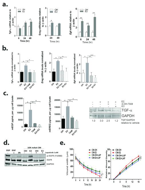 E2 upregulates EGFR ligands in astrocytes and results in EGFR activation in brain metastatic cells a. Primary mouse astrocytes were treated with vehicle (OH) or 10 nM E2 for the indicated times and qRT-PCR was used to measure Egf, Tgfα and Ereg mRNA levels. Bars represent fold change mRNA levels normalized to mouse β-Actin mRNA and relative to OH-treated. *P