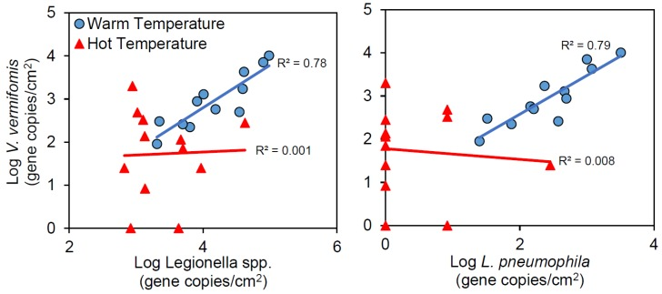 Correlation of V. vermiformis with ( A ) Legionella spp. and ( B ) L. pneumophila in distal tap <t>biofilms.</t>
