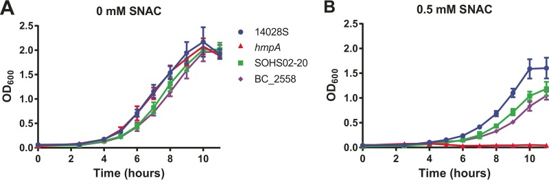 Subclade 1a S . Typhimurium with the C667T mutation in HmpA shows impaired growth under nitrosative stress. Growth curves for strains BC_2558 and SOHS02-20, representing subclade 1a strains, strain 14028S (wild type), and the hmp null strain ( hmpA mutant) in the presence and absence of the NO donor, SNAC. The values are means ± standard deviations (error bars) for the three independent trials.