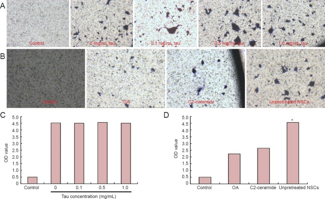 Effects of high tau protein concentration on targeted migration of NSCs in the injured spinal cord of rats (Transwell assay). (A) Cresyl violet staining of NSCs in the control group and at different tau concentrations (0, 0.1, 0.5, 1.0 mg/mL) in the lower chamber (light microscope, × 100). (B) Cresyl violet staining of NSCs in the control, OA, <t>C2-ceramide</t> and unpretreated NSC groups (light microscope, × 100). (C) Optical density of cresyl violet staining of NSCs in the control group and at different tau concentrations (0, 0.1, 0.5, 1.0 mg/mL) in the lower chamber (no significant differences observed between tau concentrations). (D) Optical density of cresyl violet staining of NSCs in the control group, OA group, C2-ceramide group and unpretreated NSCs group (optical density was significantly lower in the OA and C2-ceramide groups than in the unpretreated NSCs group). * P