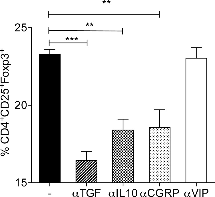 CGRP but not VIP contributes to the generation of Foxp3 + Tregs by SCG-neurons. Neuron cultures were incubated with neutralization antibodies for TGF-β, IL-10, or VIP, and CGRP antagonist for one hour before adding T cells. The co-cultures were incubated for 5 days and T cells were stained for CD3, CD4, CD25 and Foxp3 and were analyzed using flow cytometry. Mean ± SEM percentage of Foxp3 expression among CD3 + CD4 + CD25 + cells in different co-cultures are shown. (n = 6, ** = p