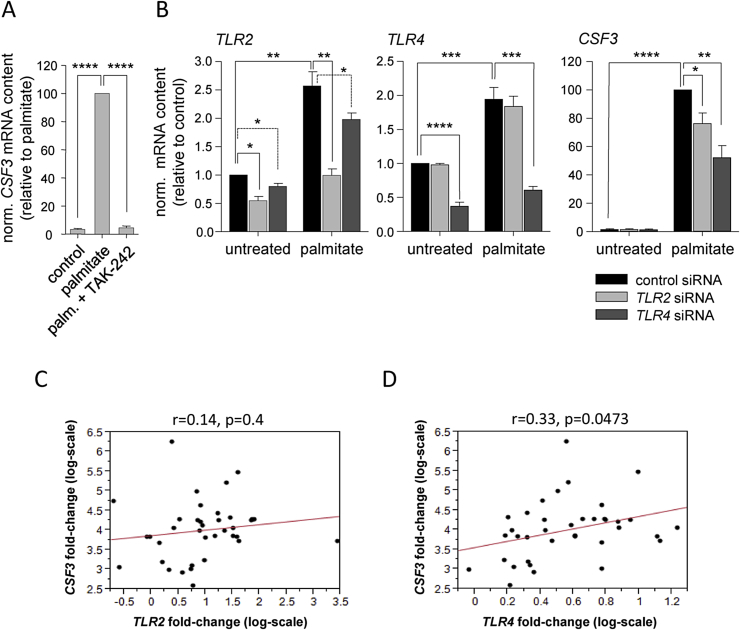 Saturated fatty acid-induced CSF3 expression via Toll-like receptors . (A) CSF3 mRNA expression was measured in human myotubes pretreated for 6 h with TAK-242 (1 μg/mL) prior to 24-hour treatment with palmitate (0.5 mmol/L). (B) Human myotubes were pretreated for 24 h with <t>siRNA</t> for <t>TLR2</t> or TLR4 , respectively, prior to 24-hour treatment with palmitate (0.5 mmol/L), and TLR2 , TLR4 , and CSF3 mRNA contents were quantified. Data are given as means ± SEM. Two-group comparisons were performed using matched-pairs Student's t -test (N ≥ 3; *p