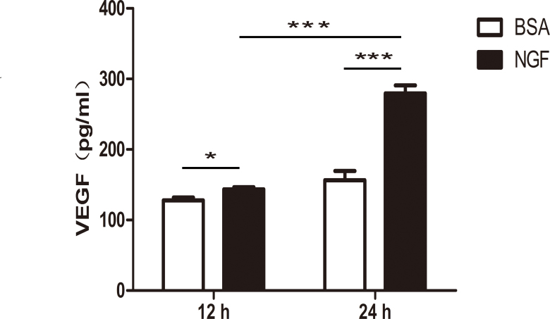 NGF increased the expression of <t>VEGF</t> in Müller cells. Müller cells were treated with 100 ng/ml of nerve growth factor (NGF) compared with an equal amount of bovine serum albumin (BSA) control. After 12 or 24 h, vascular endothelial growth factor (VEGF) protein expression in the supernatants was significantly increased in the NGF-treated group according to the enzyme-linked immunosorbent assay <t>(ELISA).</t> Importantly, the VEGF increase after 24 h was significantly higher than that after the 12 h treatments. There was no statistically significant difference between 12 and 24 h in the BSA treatment group with a p value equal to 0.0644. n=6, *p