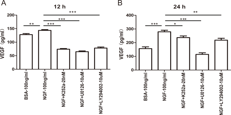 NGF increases VEGF expression via the TrkA receptor and is mediated by the activation of ERK1/2 and AKT signaling. Müller cells were treated with 100 ng/ml of nerve growth factor (NGF) with or without 20 nM K252a (TrkA inhibitor), 10 µM U0126 (extracellular signal-regulated kinases 1/2 (ERK1/2) pathway inhibitor), or 10 µM LY294002 (phosphatidylinositol 3-kinase (PI3K)/AKT inhibitor) for 12 or 24 h. The vascular endothelial growth factor (VEGF) protein level in the supernatants was detected with enzyme-linked immunosorbent assay (ELISA). The TrkA, ERK1/2, and PI3K/AKT inhibitors decreased the ability of NGF to promote VEGF expression to some extent. n=6, * p