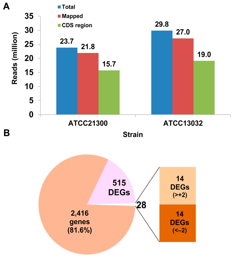 Characterization of global transcriptome in Corynebacterium <t>glutamicum</t> ATCC21300 and <t>ATCC13032.</t> ( A ) The total number of mRNA-Seq (sequencing) reads mapped in each C. glutamicum strain library; and ( B ) differentially expressed genes (DEGs) in C. glutamicum ATCC21300. Detailed information is shown in Table S2 . CDS: coding sequencing.