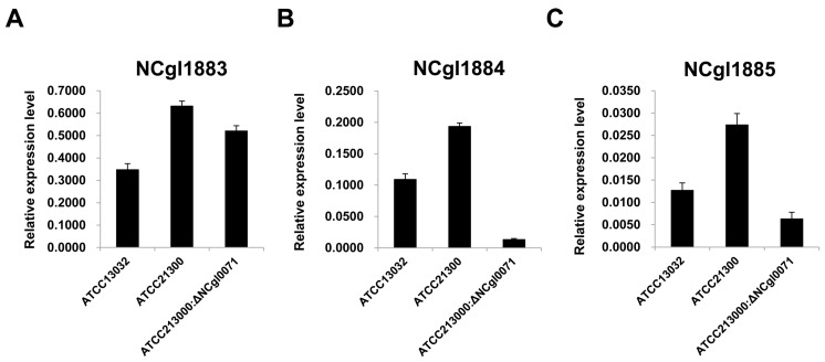 The expression patterns of genes associated with biotin transport in Corynebacterium glutamicum ATCC13032, ATCC21300, and the bioB mutant (of ATCC21300). ( A ) The expression pattern of the bioY homolog; ( B ) the expression pattern of the bioM homolog; ( C ) the expression pattern of the ABC transporter permease. The gene expression level (arbitrary units) was normalized using the 16s RNA level as an internal reference. Gene expression levels were quantified by real-time RT-PCR.