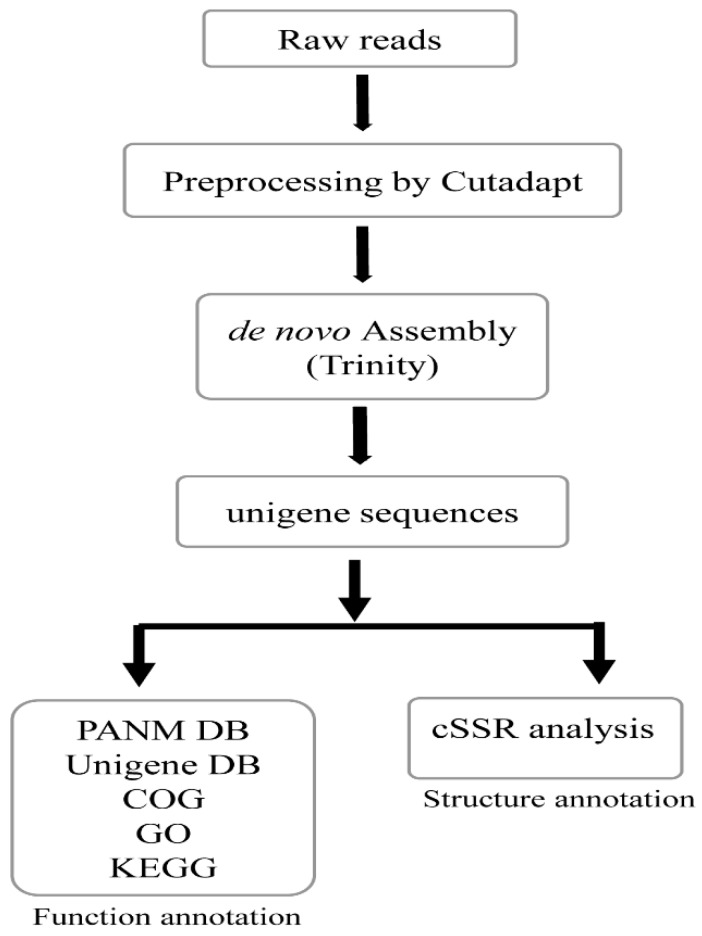 Schematic work-flow of the transcriptome analysis employed in the present study to annotate the unigenes of Korean endemic land snails, Aegista chejuensis and Aegista quelpartensis .