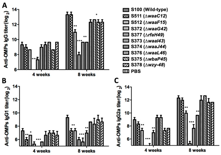 Serum antibody responses in mice immunized by the intranasal route. Total serum IgG specific for OMPs from S. Typhimurium ( A ), IgG1 specific for OMPs from S. Typhimurium ( B ) and IgG2a specific for OMPs from S. Typhimurium ( C ) were measured by enzyme-linked immunosorbent assay (ELISA). Each group has eight mice. The data represented the reciprocal anti-IgG antibody titer in pooled sera from mice immunized with OMPs from parent strain S100 and its mutants with truncated core or O -antigen at the indicated weeks after immunization. The error bars represented variations between triplicate wells. The mice were boosted at Week 5. *** p