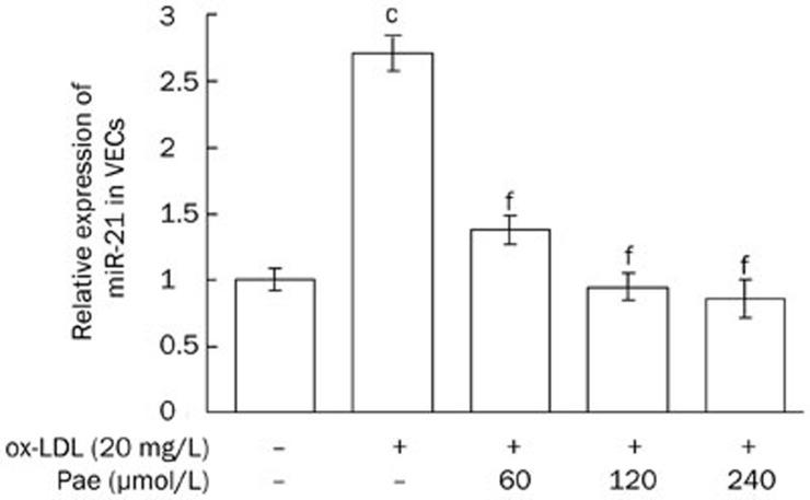 Downregulative effects of paeonol on miR-21 expression were analyzed by SYBR Green PCR assay. VECs were pretreated with varying concentrations of paeonol (60, 120, and 240 μmol/L) for 24 h and stimulated by ox-LDL (20 mg/L) for another 24 h, then miR-21 expression was analyzed. Data were expressed as mean±SD. n =3. c P