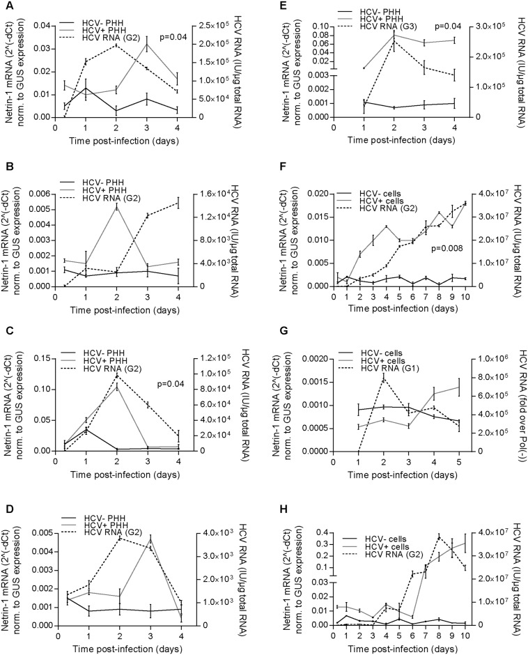 HCV induces the expression of Netrin-1 in vitro. A, B, C, D. HCV induces Netrin-1 mRNA in primary human hepatocytes. Cells were infected at a MOI of 1 with HCV genotype 2 strain 4 d after seeding ( n = 4 independent preparations from four different patients, Wilcoxon test, p